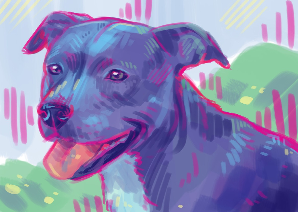 digital pet portrait painting silly dog colorful style