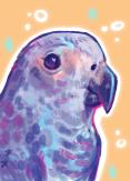 digital portrait painting of a pet parrot