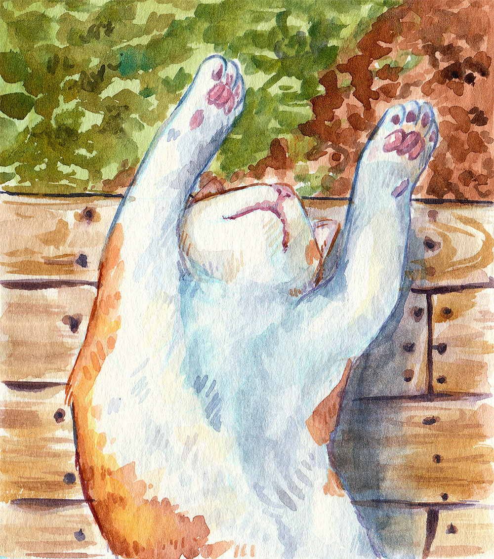 watercolor illustration of a napping kitty