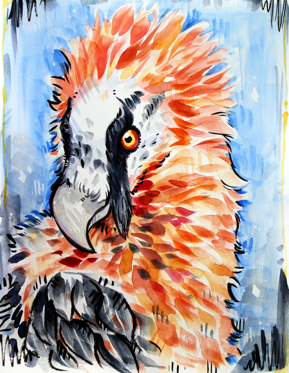watercolor and ink vibrant illustration of a bearded vulture