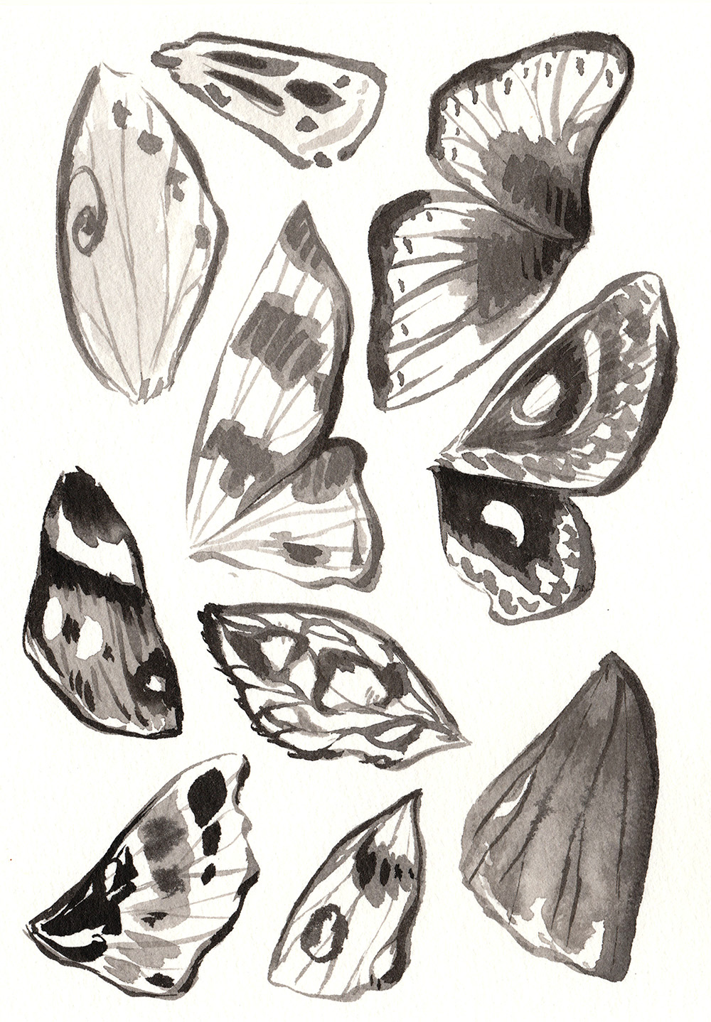 Ink illustration of various moth wings